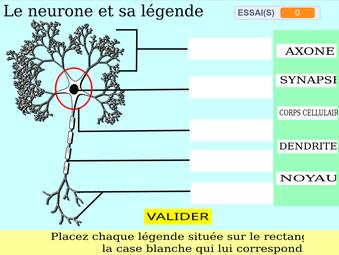 vignette-neurone.png